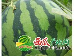 西双版纳勐海县勐阿镇大量美都供货西瓜代办