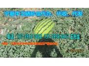 2019宁夏中宁西瓜代办电话(宁夏石头西瓜上市时间)
