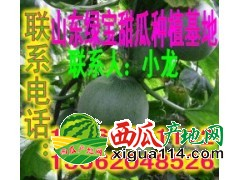 山东绿宝甜瓜大量上市