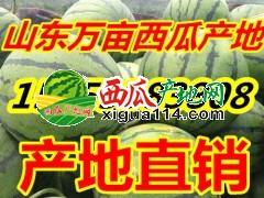 山东西瓜油桃产地15953983808