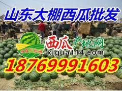 供应西瓜产地价格18769991603