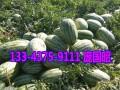 新疆西瓜上市时间-新疆吐鲁番西瓜代办13109921118电话