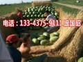 2017年吐鲁番西瓜代办产地新疆西瓜代收13109921118