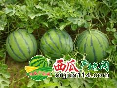 安徽砀山 西瓜 苹果 酥梨 代办代购