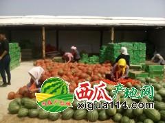 山东潍坊早春红玉,京欣,冰糖子,羊角蜜,绿宝