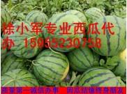 2017安徽固镇石湖西瓜大量上市了--实力西瓜代办徐小军