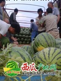 甜王西瓜西瓜图二