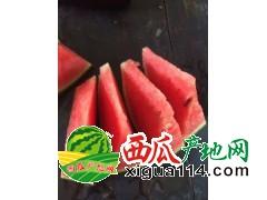 潍坊寒亭大量供应早春红玉西瓜