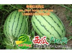 供应山东潍坊早春红玉西瓜 供应小西瓜