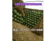 2021宁夏中宁西瓜产地价格(宁夏中卫西瓜代办石头瓜产地)