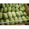 宁夏中卫石头硒砂瓜产地价格批发-155-9557-7005