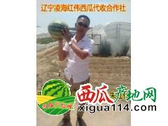 2017年辽宁凌海西瓜代办产地价格批发