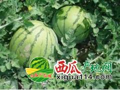 山东最大的西瓜生产种植基地