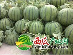 山西省忻州市出售沙地西瓜甜瓜