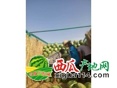 2017陕西定边白泥井和内蒙鄂托克前旗西瓜
