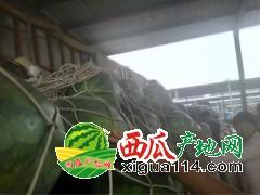 河南京欣、双星、鲁青、甜王、诚信专业代办