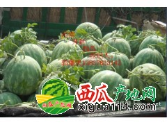 河南无籽西瓜0.26元有籽西瓜0.2元产地供货量大