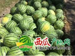 黑龙江绥化西瓜代办批发产地