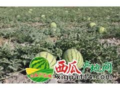 山西曹张西瓜大甩卖0.15-0.18元