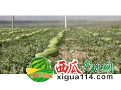 中宁西瓜 硒砂瓜产量过高,滋润可口