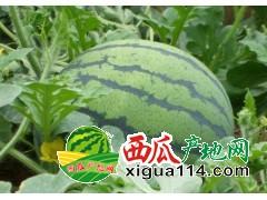 黑龙江绥化西瓜代办产地价格-红旗西瓜批发供应基地