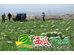2018-新疆昌吉市西瓜代办产地-新疆西瓜代收电话