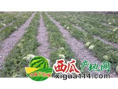 宁夏中卫西瓜批发产地石头瓜价格行情-代收电话15009654888