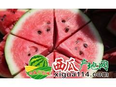 浙江绍兴8424西瓜苹果价格多少钱一斤绍兴西瓜代办产地大量上市