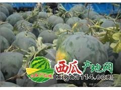 海南东方花皮无籽西瓜代办批发产地西瓜大量上市中