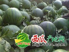 海南省陵水花皮无籽西瓜代办批发基地价格-本地西瓜已上市