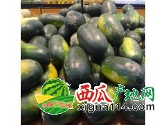 广东阳西麒麟西瓜代办批发基地-广东西瓜4月上市价格实惠