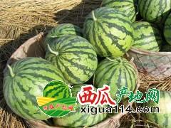 安徽省濉溪县西瓜批发产地价格供应行情