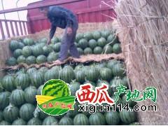 2018优质湖南宁乡麒麟西瓜代办产地价格批发电话