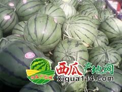 广东最大水果批发市场