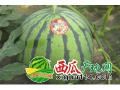 黑龙江绥化西瓜专业代办、代发西瓜