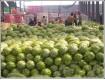 广东东莞下桥整车水果交易市场