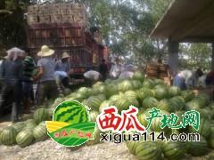 收购或代卖各地西瓜