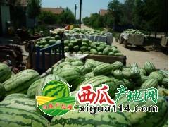 2018年辽宁省新民大棚西瓜代办产地西瓜上市价格