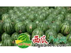 吉林四平公主岭怀德7月-8月甜王系列西瓜代办
