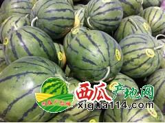 安徽砀山京欣西瓜产地价格、香瓜代办供应