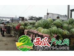 2018河南周口西瓜价格行情扶沟尚村岗西瓜代办产地