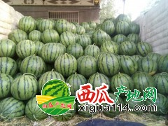 2018年山东省泗水县大棚西瓜代办产地西瓜陆续上市中