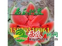 山东西瓜产地批发价格在浙江、江西、湖南畅销
