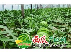 2018年广西南宁西瓜代办产地广西南宁西瓜批发价格