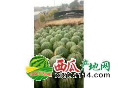 2018辽宁省新民市西瓜代收