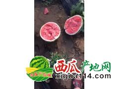 2018辽宁省新民市西瓜代收17162404222