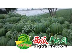 2018年山东聊城莘县西瓜产地价格代办供应基地