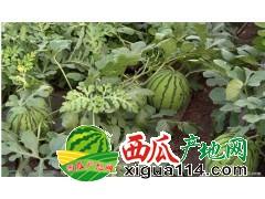 2018山东济宁泗水京欣西瓜代办批发价格