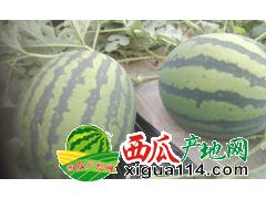 2018/江苏盐城东台三仓镇西瓜代办批发产地西瓜价格