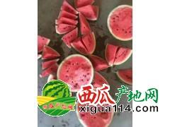 陕西西瓜代办黑无籽西瓜、花无籽西瓜